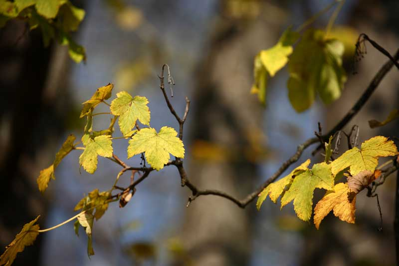 autumn leaves, autumn is a great time to take inventory of your hvac