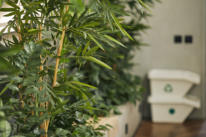 bamboo trees and recycling inside office showing healthy air